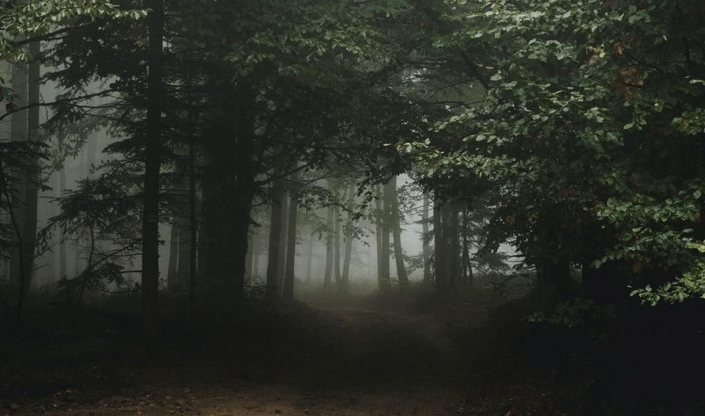 Il sentiero stagionale della chiarezza: la simbologia delle stagioni come mappa per uscire dalla confusione