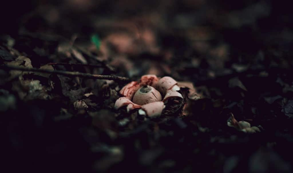 Metafore naturali
