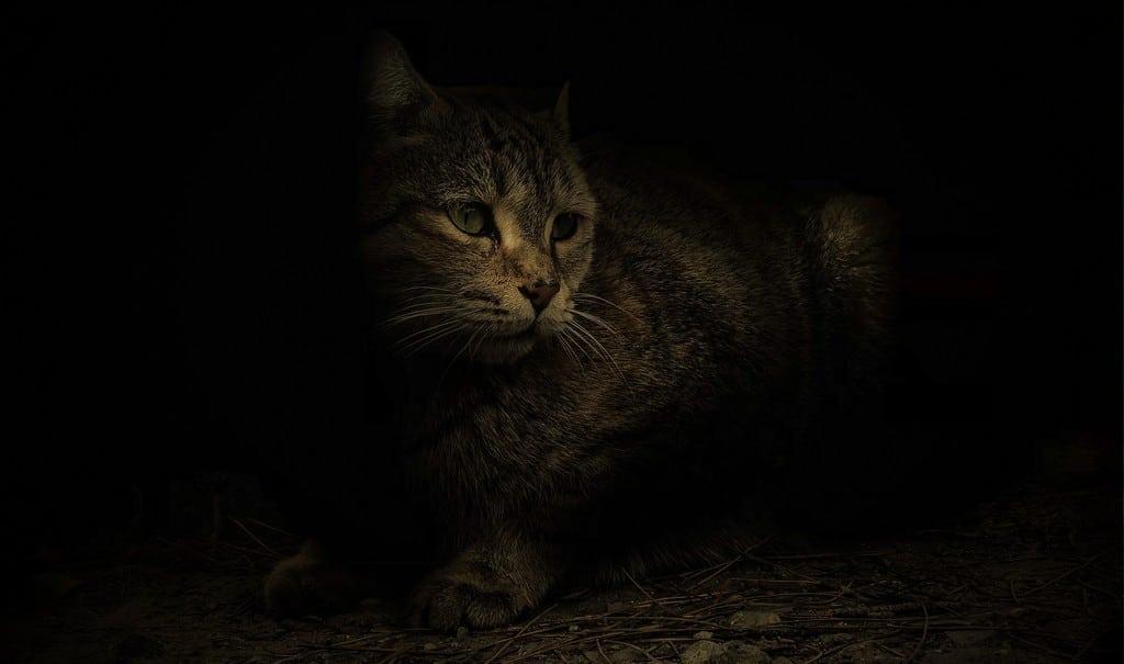L'animale ombra
