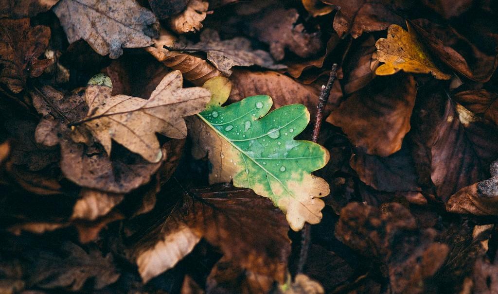 L'autunno come richiamo a non ostacolare il nostro personale processo di decomposizione psichica