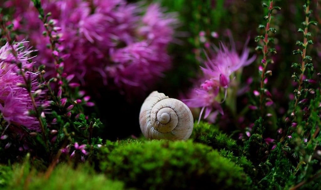 Adattare la Biomimetica alla propria crescita personale