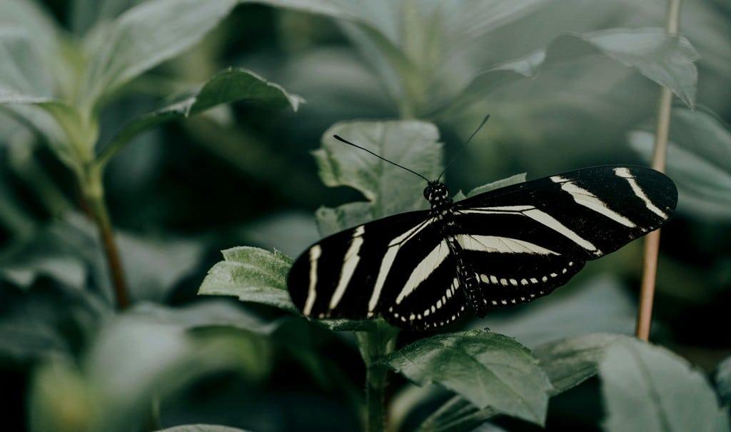 Gestire con grazia i propri processi di metamorfosi