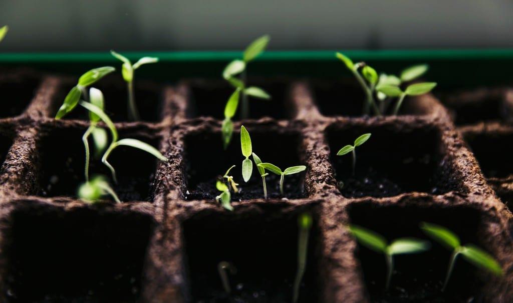 Coltivare delle piante