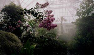 Giardino interiore