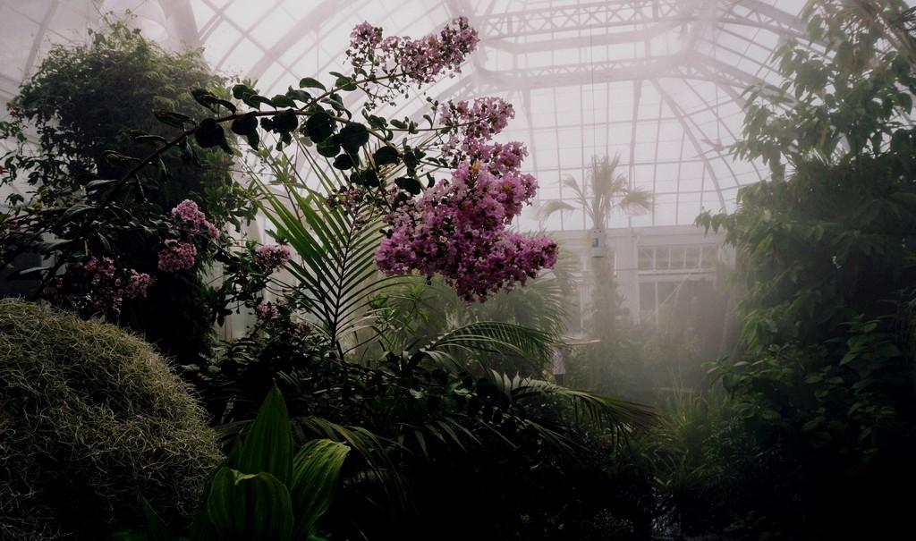 Curare il proprio giardino interiore