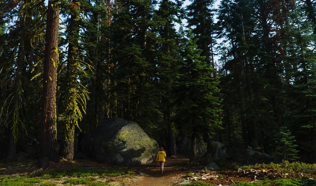 Fare un bagno di foresta