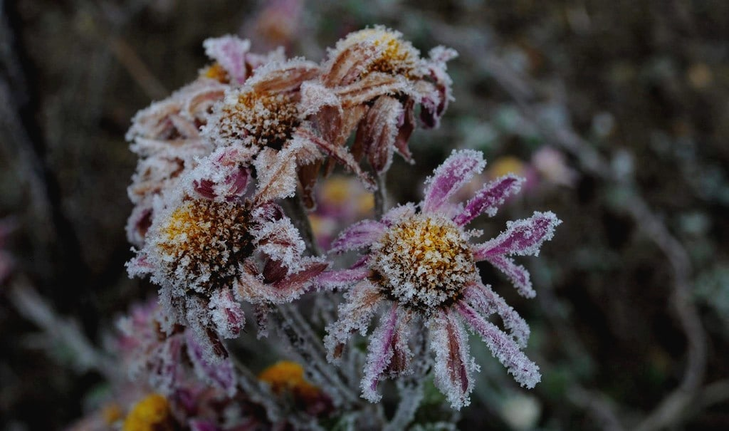 L'inverno regala l'opportunità di vivere serenamente il proprio congelamento psicofisico