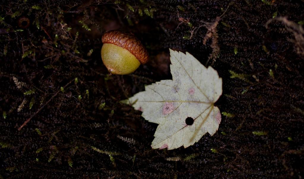 Scoprire la propria vocazione richiede di dissotterrare un seme dorato