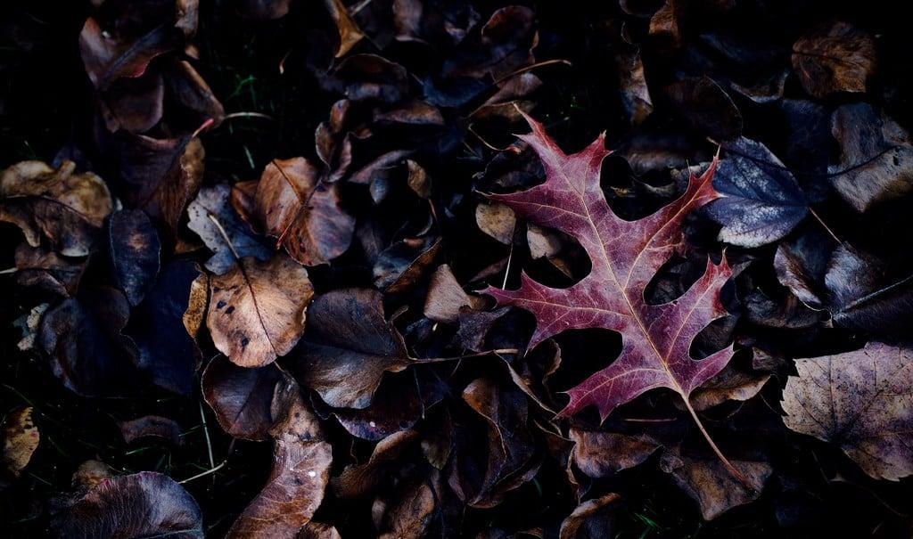 Simbologia delle stagioni