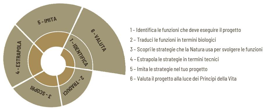 Spirale della progettazione biomimetica